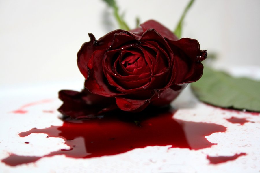 the_dying_rose____by_dealingheart-d1h97x2